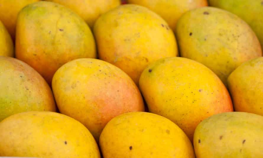 Close-up, high angle view of a tray of mangoes