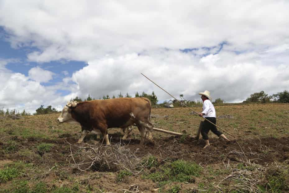 Castillo guides a plough on his property in Chugur.