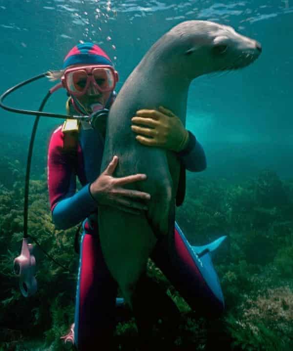 Valerie Taylor and an Australian sea lion
