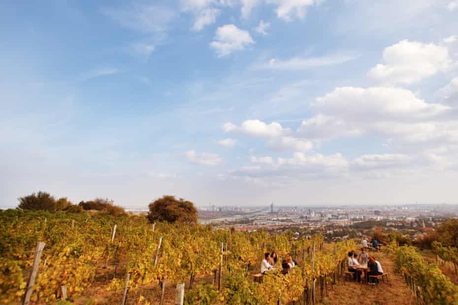 Vineyard on the Nussberg, Vienna.