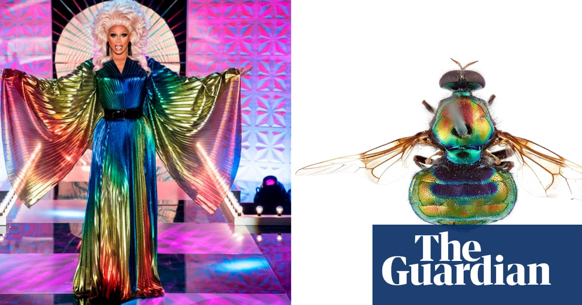 'Rainbow colours and legs for days': Australian fly species named after drag star RuPaul