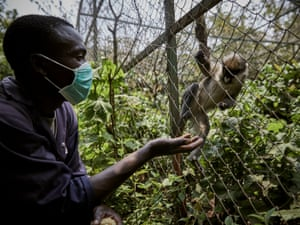 Caretaker Simon Ngabo with a red-railed monkey at Lwiro Primate Centre. 'The centre is very important for the region and community; [it] sensitises the community to protect animals and fight against poaching. The poachers, before taking a small chimp, will kill the mother and father. This remains in their minds and affects them emotionally in their daily life.'