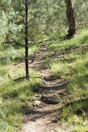 A typical pathway through Bydabo wilderness on the Bundian Way.