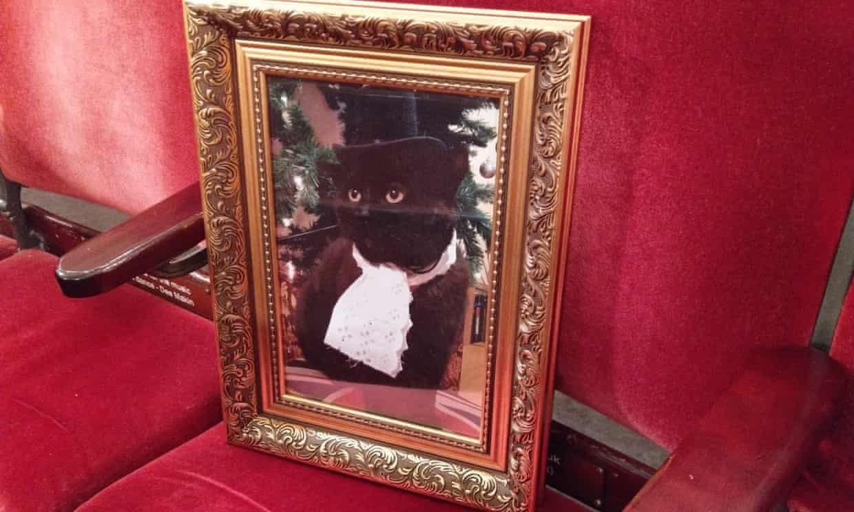Commemorating Your Cat