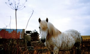 The Highlands of Scotland A white horse in a field.