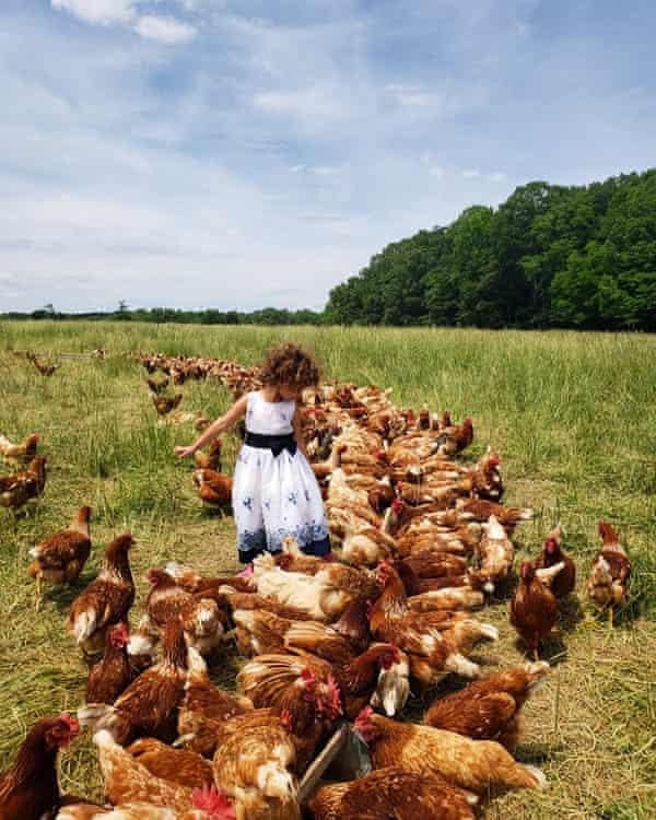 Chickens on Sylvanaqua Farms
