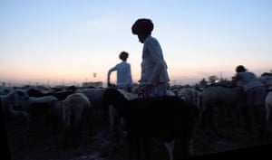 Shepherds gather their flock at their camp in Sikri