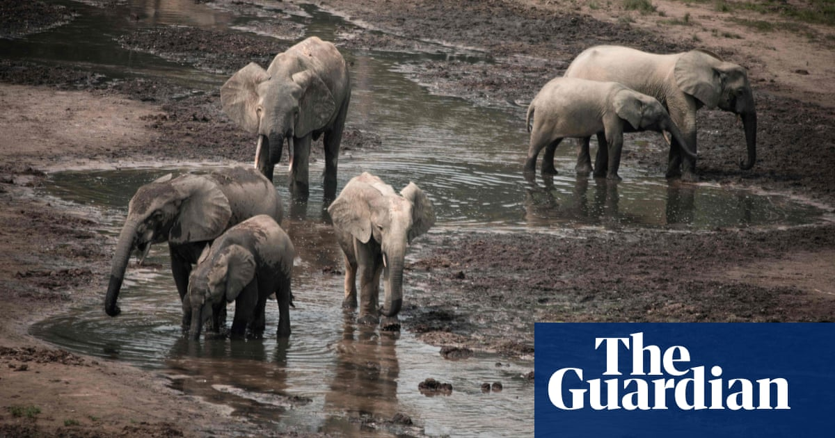 African elephant recognised as two separate species – both endangered