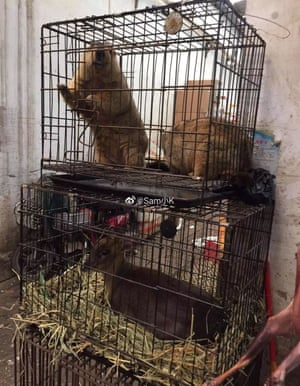 A marmot and a muntjac in separate cages at a market.