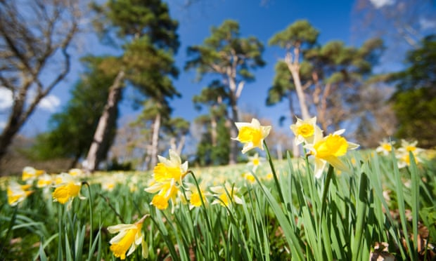 Early Spring Flowers Around The Uk Readers Travel Tips Travel