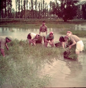 In the Camargue, rice transplantation by hand, circa 1965, unknownAn exhibition at the Musee d'Arles Antique looks at the socio-political development of the Rhône delta.