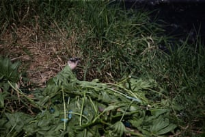 The body of a man who was kidnapped and killed lies in undergrowth in San Pedro Sula