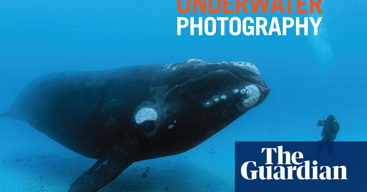 Unforgettable underwater photography in pictures environment unforgettable underwater photography in pictures environment the guardian publicscrutiny Image collections