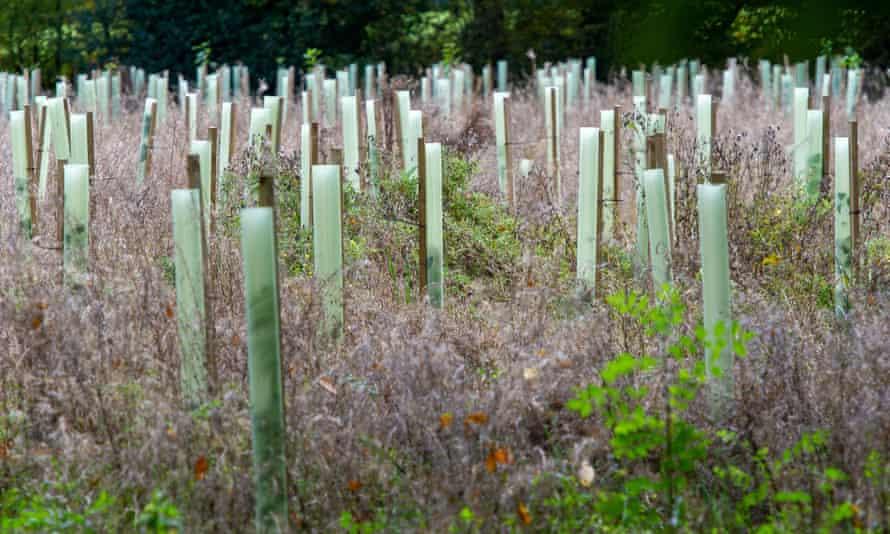 Newly planted saplings