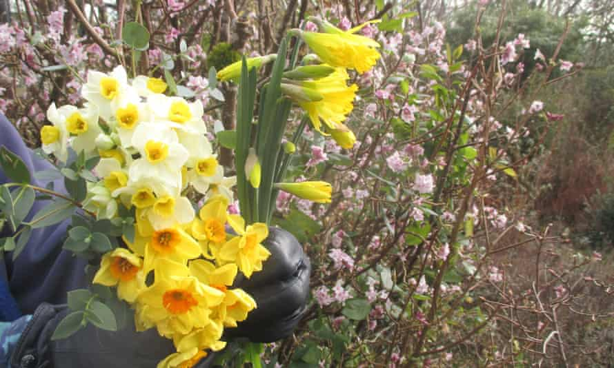 Bunches of Narcissus tazetta from a roadside stall, with some 'Henry Irving' daffodils.