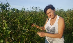 Whitsunday Gold coffee plantation's co-manager, Ali Simpson