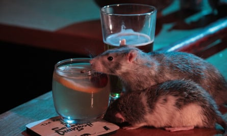 'What could be more relaxing after a hard day's work than sitting back with a few friends, sipping a cool cocktail and letting a bunch of rats run all over you?'