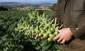 Drysdales growers of sprouts for Tesco. Drysdales is a long-established, innovative agricultural business located in the Scottish Borders. The company has developed from its origins as a farm-based enterprise to a nationwide processor of added-value, locally grown vegetables.