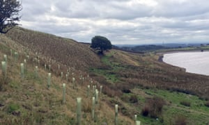 tree planting at spring mill reservoir near rochdale, manchester, august last year