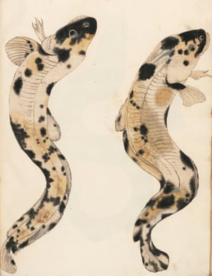 This pair of river fish (spotted burbot) is painted in an almost Japanese style