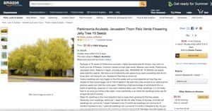 An advertisment for Parkinsonia aculeata on Amazon offering to ship to Australia from the US.