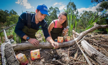 Deakin University PhD candidate Katy Limpert and researcher Peter Macreadie bury the first of 50,000 teabags which will be placed in wetlands around the globe as part of a world-first project to monitor carbon sequestration and breakdown.