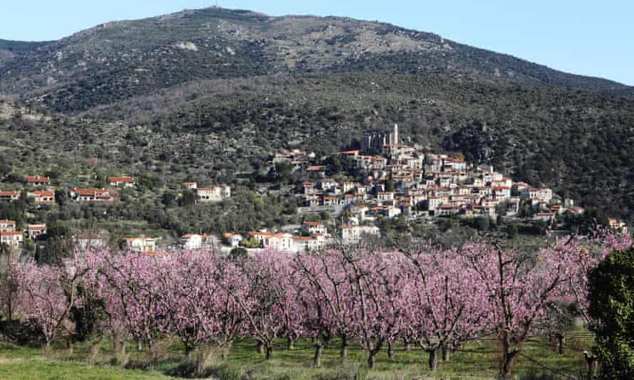 Peach trees flowering about 20 days earlier than usual in Eus, southern France.
