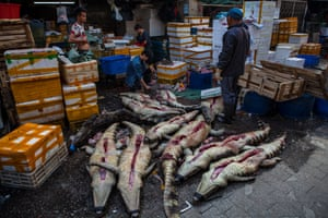 Crocodiles on display for buyers at Huangsha seafood market in Guangzhou, Guandong province, China.