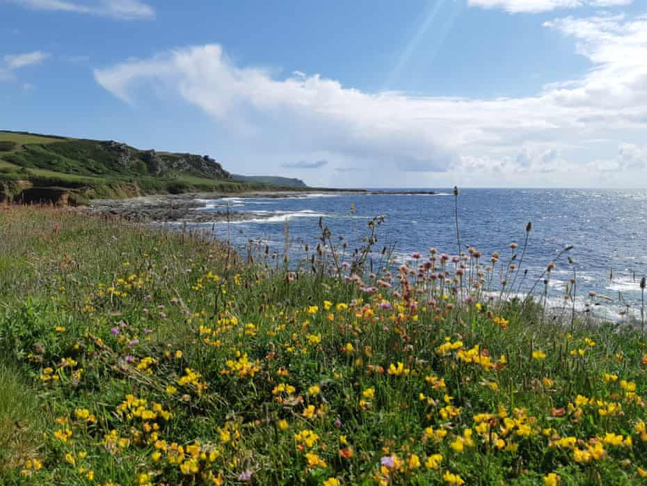 Prawle Point in south Devon in bloom with yellow flowers