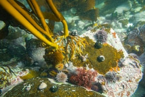 Marine life beneath seaweed