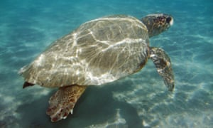 A night curfew in place in Zakynthos aims to protect mating loggerhead turtles – but this week it disrupted replacement aircraft reaching the Greek island.