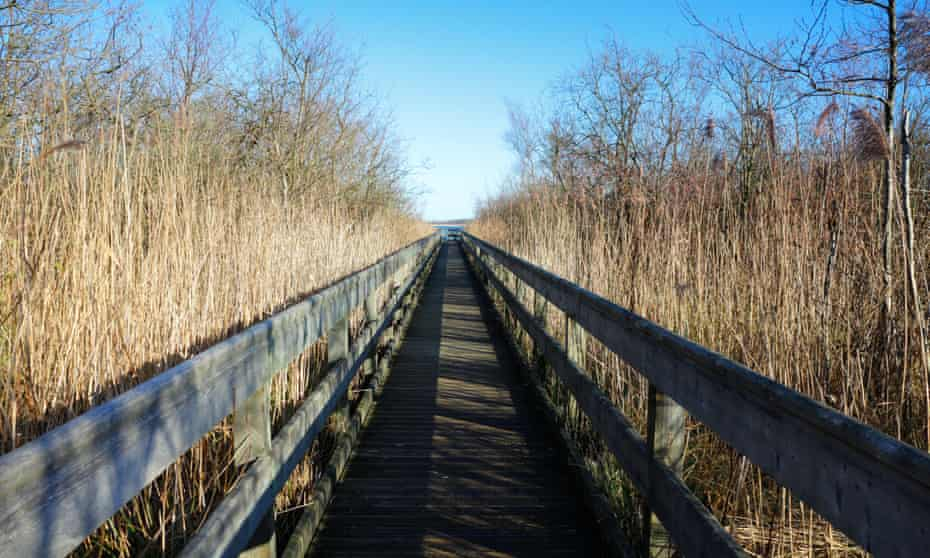 A view of the boardwalk through reed beds to Barton Broad on the Norfolk Broads