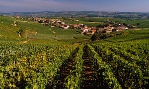 Loire vineyard, France