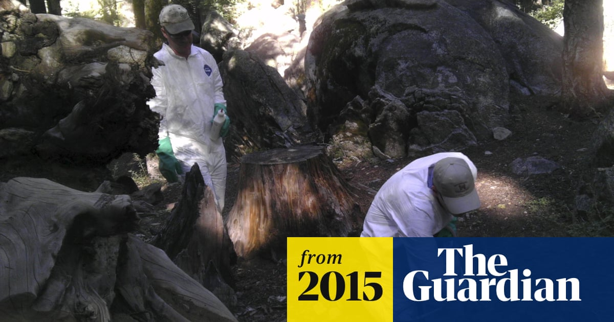 Squirrels with plague and tree-limb deaths darken Yosemite summer