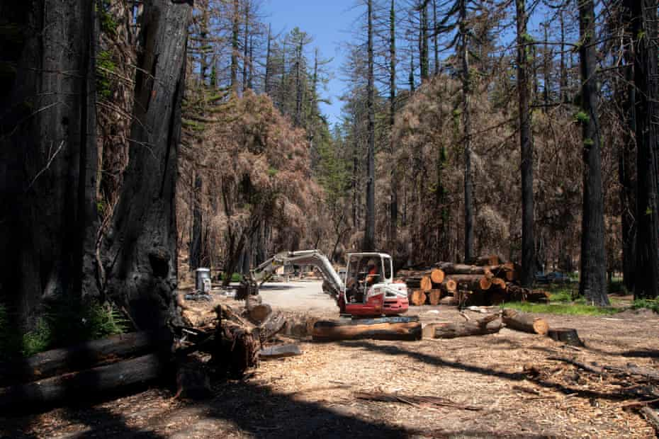Crews work to clear dead trees from within the burn scar inside Big Basin Redwoods state park.
