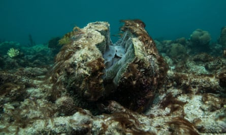 Dead and dying coral covered by seaweed after coral bleaching at Lizard Island on Australia's Great Barrier Reef.