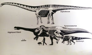 How the Highland Giant compared to other dinosaurs.