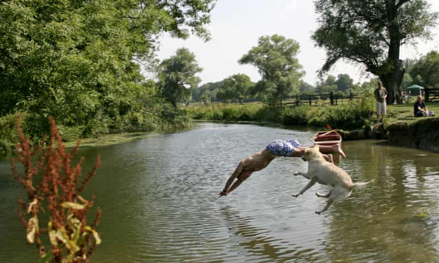 A man and a dog jump into the River Cam