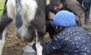 Milking the goats at Hanericka.