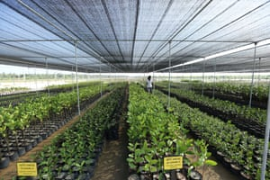 Kalpitiya Mangrove Nursery, in the Puttalam district –one of three such nurseries established under the project