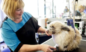 Suzie the shih tzu gets a blow dry from Diane Gay at K9 Groomers, Highbridge.