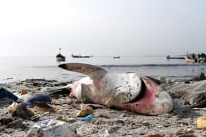 A dead shark surrounded by litter on the beach at Hann in Dakar.