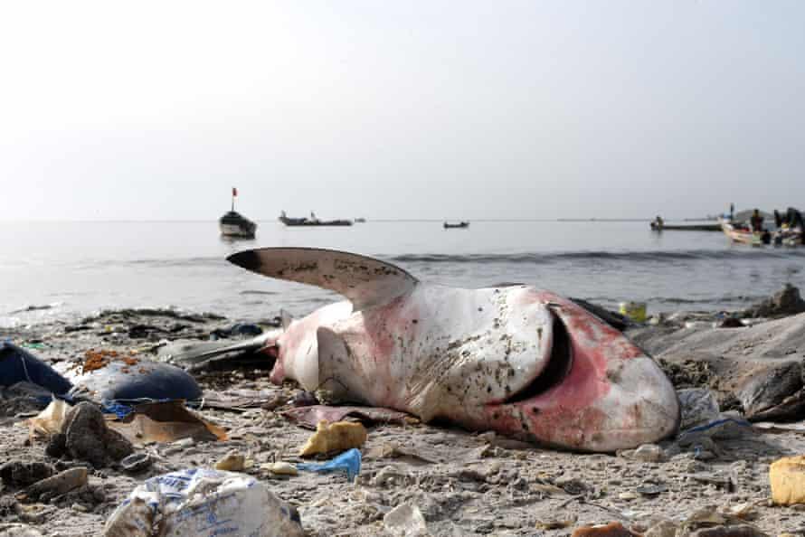 A dead shark surrounded by litter on the beach at Hann in Dakar.
