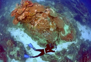 A ranger inspects the Great Barrier Reef's condition near Lady Elliot Island in Queensland.