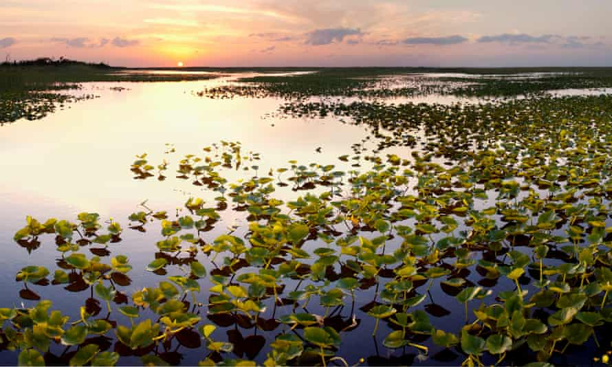 The Everglades wilderness has already been reduced by half by the construction of dams and canals and to accommodate a booming population.