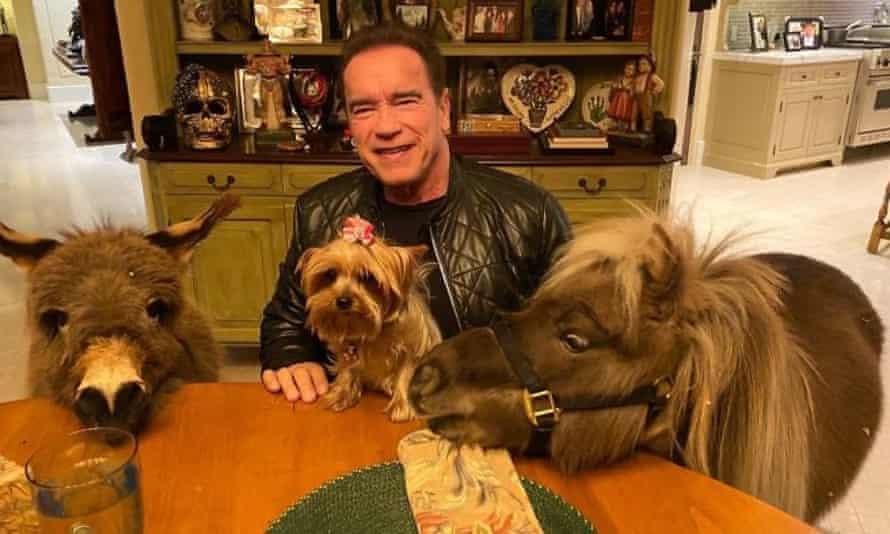 Arnold Schwarzenegger's menagerie, captured via YouTube.