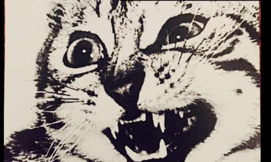 Detail of a widely shared image featuring the slogan 'Pussy Grabs Back' over a snarling cat. Composite by Jessica Bennett, original image by Stella Marrs.