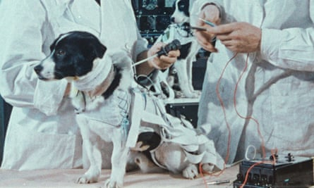 Soviet engineers prepare to measure a dog's responses in a test.