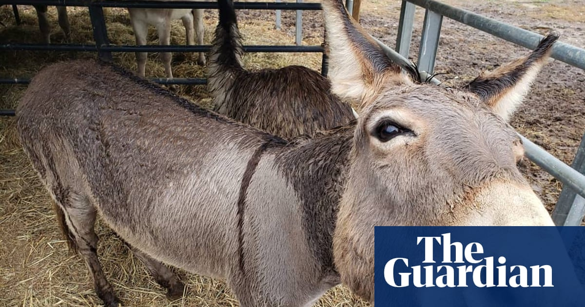 Donkey and emu that 'fell in love' adopted by Walking Dead actor