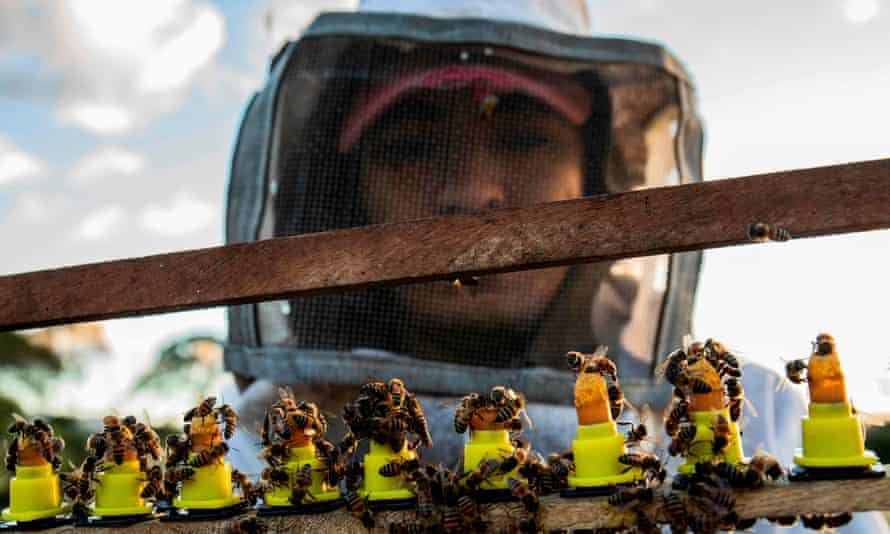Beekeeper studying queen bees.